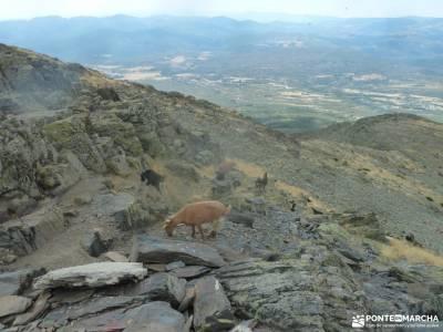 El Ocejón-Reserva Nacional Sonsaz;sierra de guadarrama madrid duques de alburquerque club escalada